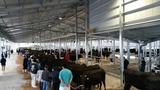 第165回南九州肥育牛共進会