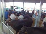 第166回南九州肥育牛共進会