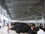 第167回南九州肥育牛共進会