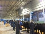 第168回南九州肥育牛共進会