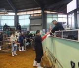 第168回南九州肥育牛共進会 その2