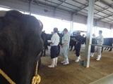 第170回南九州肥育牛共進会