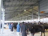 第172回南九州肥育牛共進会