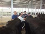 第174回南九州肥育牛共進会