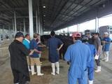 第177回南九州肥育牛共進会