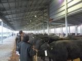 第178回南九州肥育牛共進会