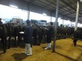 第179回南九州肥育牛共進会