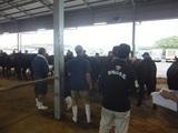 第180回南九州肥育牛共進会