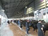 第181回南九州肥育牛共進会